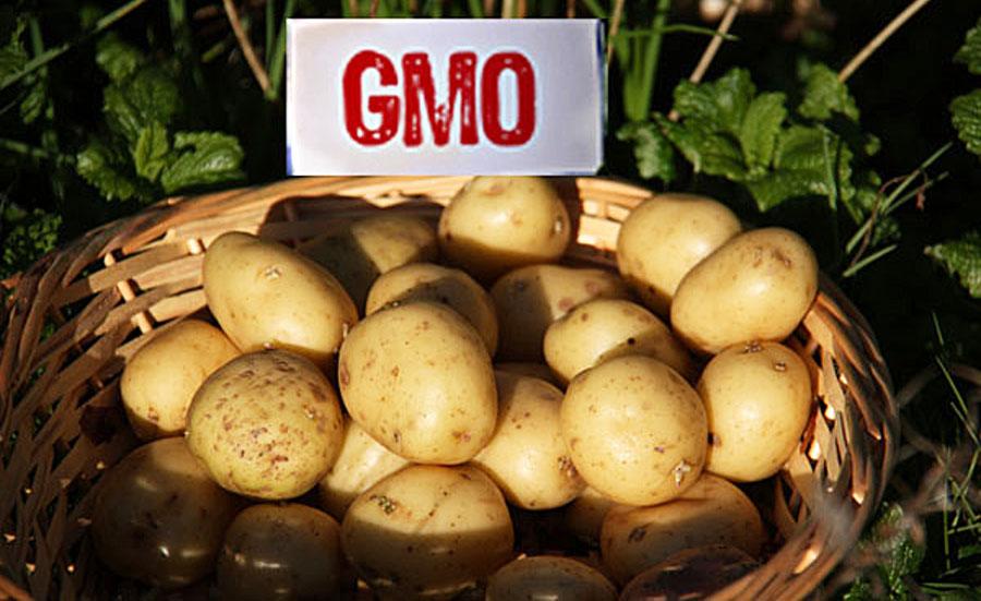 cartof GMO